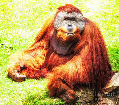 Photograph - Orangutan Posing by Frances Ann Hattier