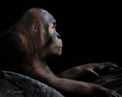 Photograph - Orangutan Session II by CR  Courson