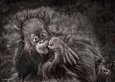 Photograph - Orangutang Thoughts by LeeAnn McLaneGoetz McLaneGoetzStudioLLCcom