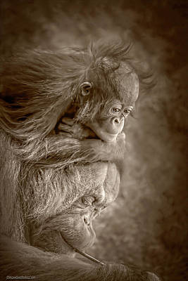 Photograph - Orangutangs Learnings by LeeAnn McLaneGoetz McLaneGoetzStudioLLCcom