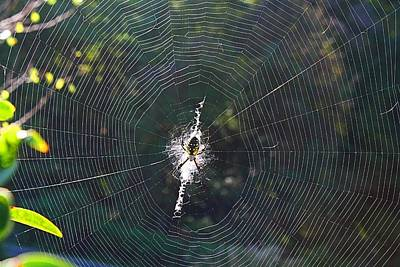 Photograph - Orb Web by Kathryn Meyer