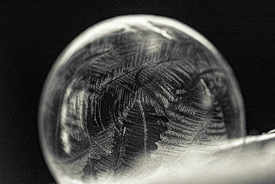 Photograph - Orbicle by Susan Capuano