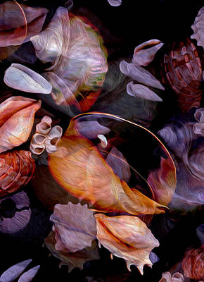 Orbiting Seashells Art Print by Lynda Lehmann