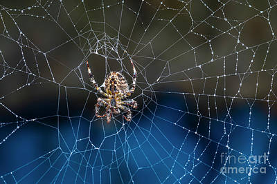 Photograph - Orb's Web by Joann Long