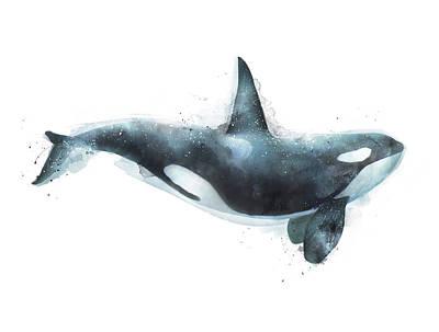 Whale Painting - Orca by Amy Hamilton