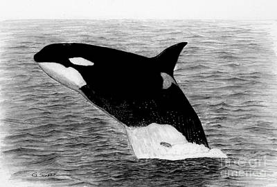 Orca Drawing - Orca by George Sonner