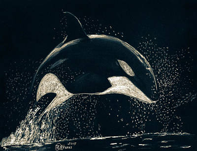 Orca Drawing - Orca by Heike Althaus