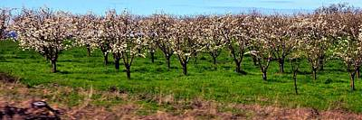 Jerry Sodorff Royalty-Free and Rights-Managed Images - Orchard 316 by Jerry Sodorff