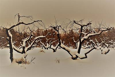 Photograph - Orchard  by Gerald Salamone