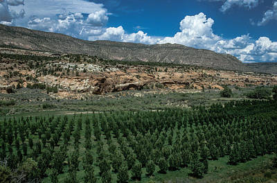 Photograph - Orchard In Mcelmo Canyon Near Cortez, Colorado by John Brink