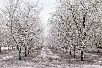 Photograph - Orchard Lane by Kathi Mirto