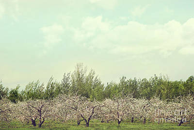 Orchard Of Apple Blossoming Tees Art Print