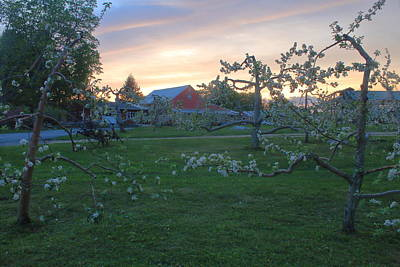 Photograph - Orchard Sunset by John Burk