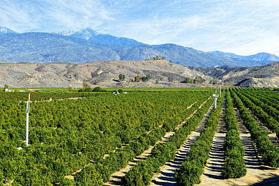 Photograph - Orchards Of Hemet by Glenn McCarthy Art and Photography