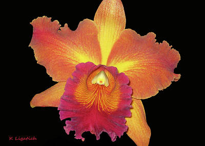 Photograph - Orchid - Colors Of A Sunset by Kerri Ligatich