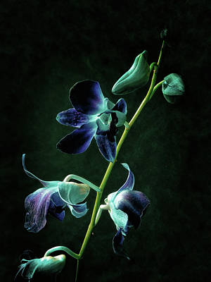 Photograph - Orchid #1 by Janet E Gorman