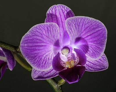 Photograph - Orchid 1 by Richard Thomas