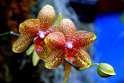 Orchid 17 Art Print by Marty Koch