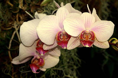 Photograph - Orchid 19 by Marty Koch
