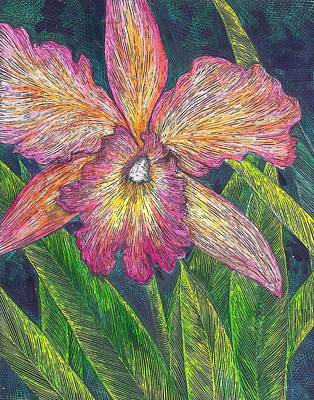 Scratchboard Painting - Orchid 2 by Cynthia Conklin
