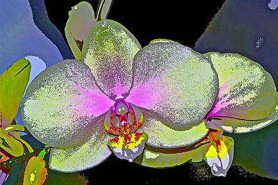 Orchid 2 Art Print by Pamela Cooper