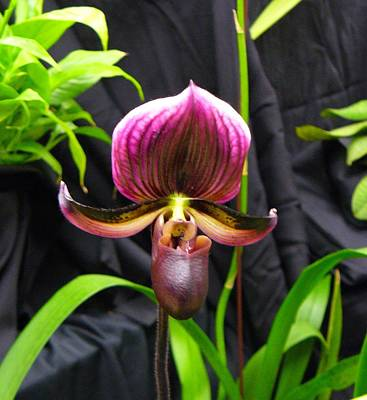 Photograph - Orchid 2 by Peggy King