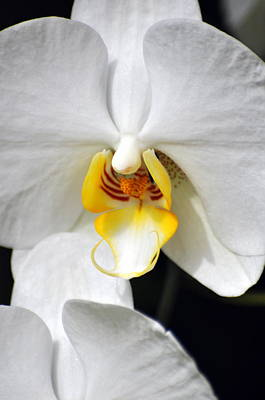 Orchid 23 Art Print by Marty Koch