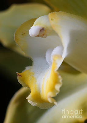 Photograph - Orchid 259 by Rudi Prott