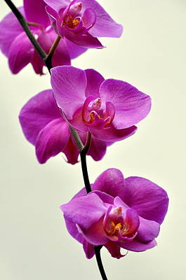 Orchid 26 Art Print by Marty Koch