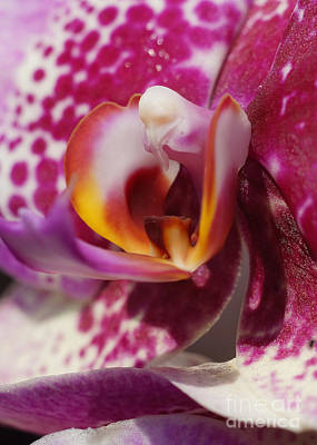 Photograph - Orchid 261 by Rudi Prott