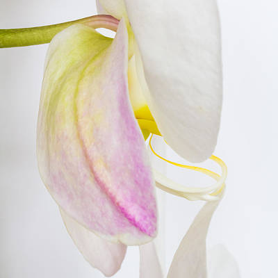 Photograph - Orchid 3 by Patricia Schaefer