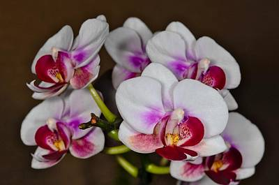 Photograph - Orchid 306 by Wesley Elsberry