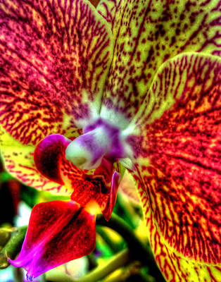 Photograph - Orchid 346 by Jeff Stallard