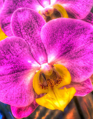Photograph - Orchid 347 by Jeff Stallard
