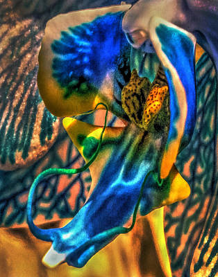 Photograph - Orchid 348 by Jeff Stallard