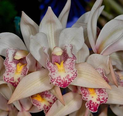 Photograph - Orchid 348 by Wesley Elsberry