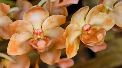 Photograph - Orchid 392 by Wesley Elsberry