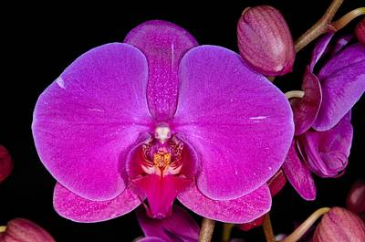 Photograph - Orchid 424 by Wesley Elsberry
