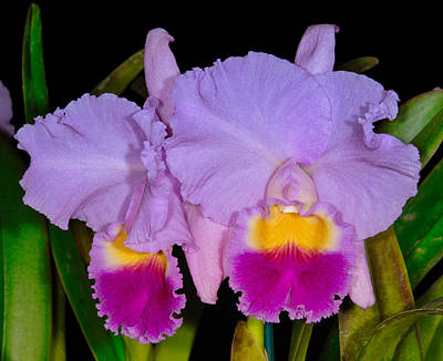 Photograph - Orchid 428 by Wesley Elsberry