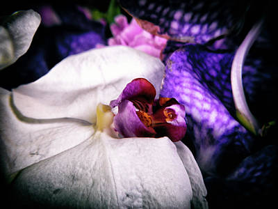 Photograph - Orchid #6 by Janet E Gorman