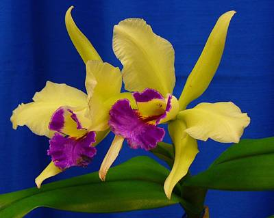 Photograph - Orchid 7 by Peggy King