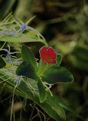 Photograph - Orchid  7 by Susan Garrett