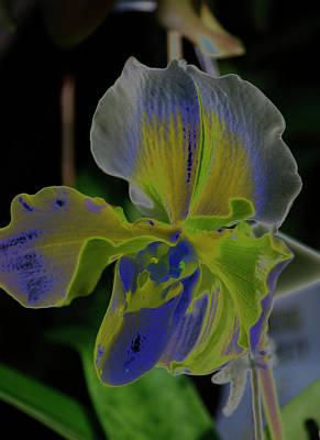 Photograph - Orchid  8 by Susan Garrett