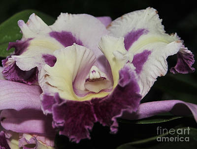 Blc Photograph - Orchid 87 by Terri Winkler