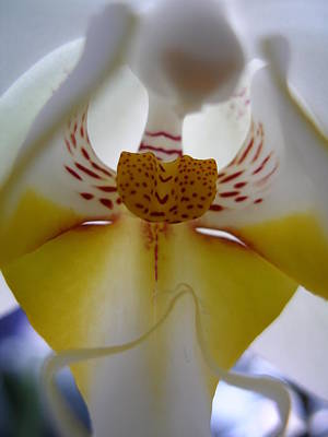 Photograph - Orchid Alien by Michael Canning