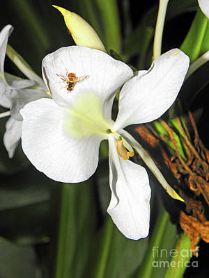 Photograph - Orchid And Bee by Elizabeth Hoskinson