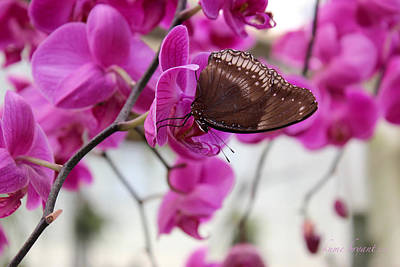 Photograph - Orchid And Butterfly by Kume Bryant