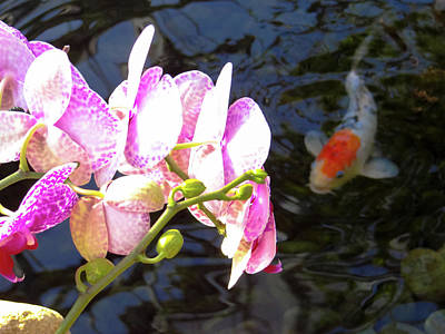 Photograph - Orchid And Koi by Julia Wilcox