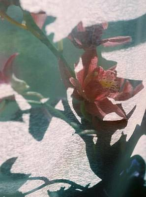 Orchid And Shadows Original by Valerie Brown