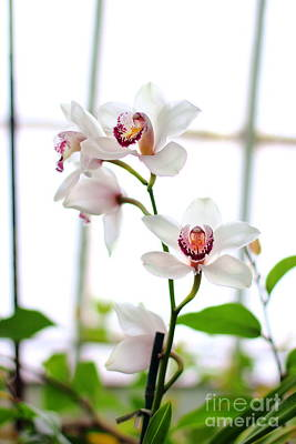 Photograph - Orchid by Angela Rath